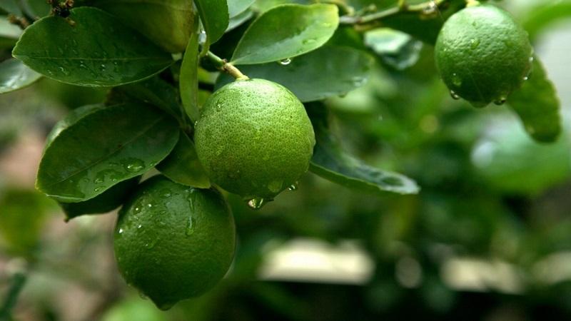 Займы в lime в Новошахтинске