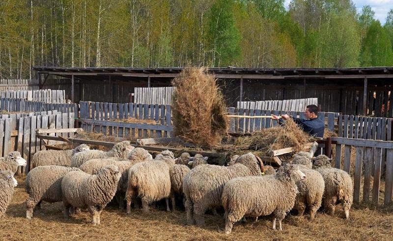 Кредиты в Смоленске на личное подсобное хозяйство